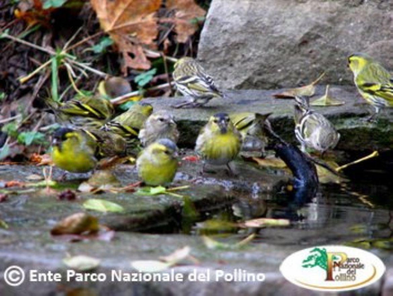 Leggi: Parco Nazionale del Pollino - Natura e Sport