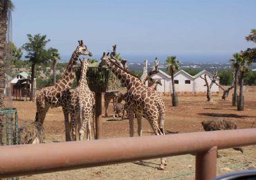 Leggi: Il Parco Faunistico più grande d'Italia: Zoo Di Fasano