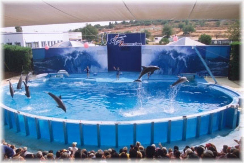 Il parco marino zoomarine for Gioco di piscine