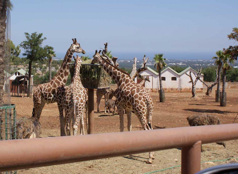 Il Parco Faunistico più grande d'Italia: Zoo Di Fasano