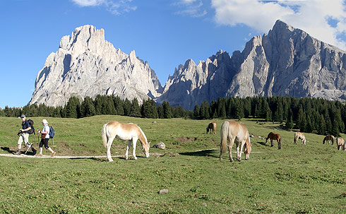 http://www.hotelfree.it/itinerari_trentino%20alto%20adige/img/alpe_di_siusi.jpg